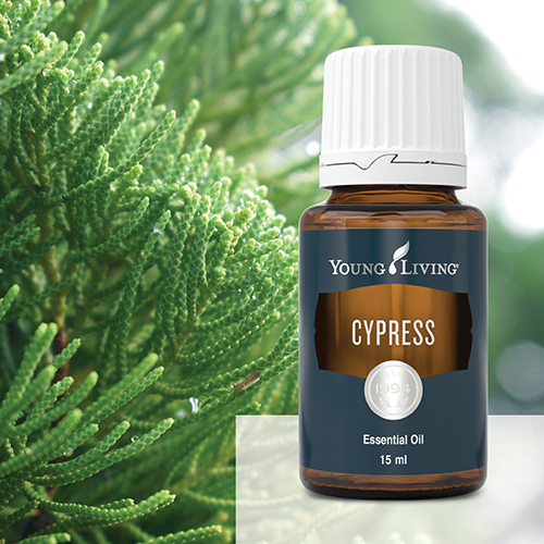 Ulei Esential chiparos - Cypress Young Living